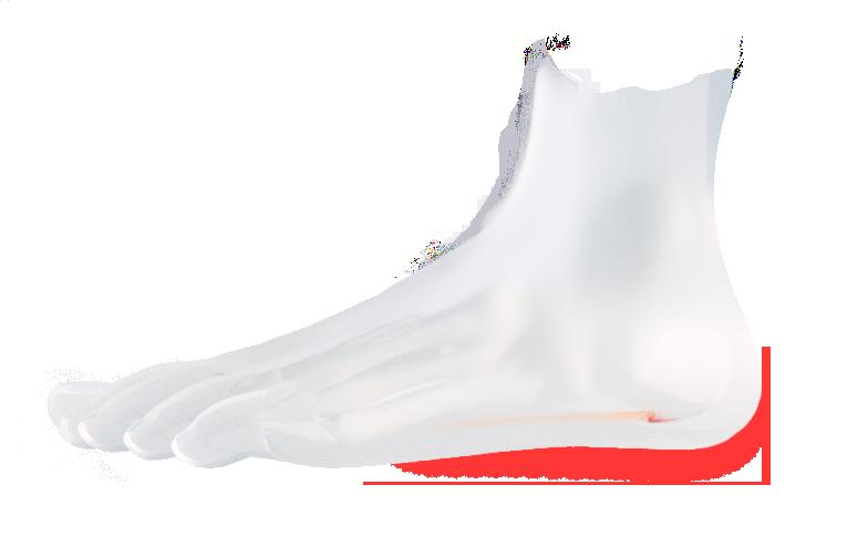 Fuß mit Fersensporn links